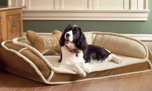 The 5 Best Dog Beds of 2020